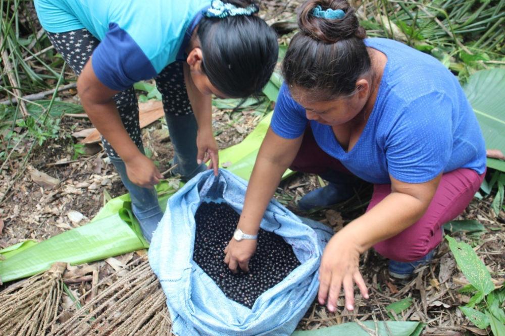 Manejo de asaisales como estrategia de preservación de humedales frente al cambio climático
